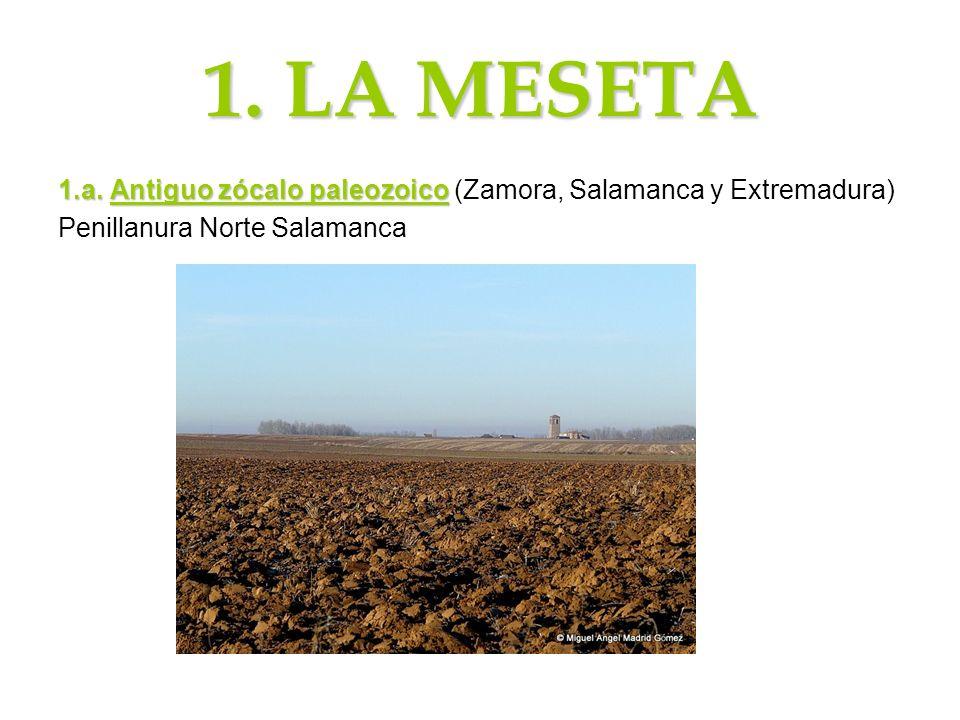 1. LA MESETA 1.a. Antiguo zócalo paleozoico 1.a. Antiguo zócalo paleozoico (Zamora, Salamanca y Extremadura) Penillanura Norte Salamanca