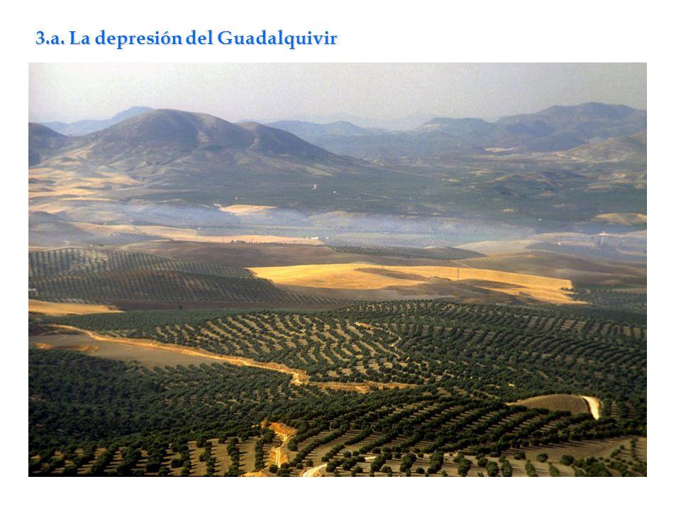3.a. La depresión del Guadalquivir