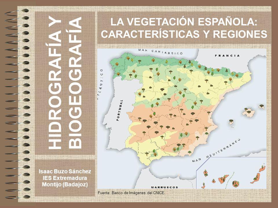 HIDROGRAFÍA Y BIOGEOGRAFÍA Isaac Buzo Sánchez IES Extremadura Montijo (Badajoz) LA VEGETACIÓN ESPAÑOLA: CARACTERÍSTICAS Y REGIONES Fuente: Banco de Im
