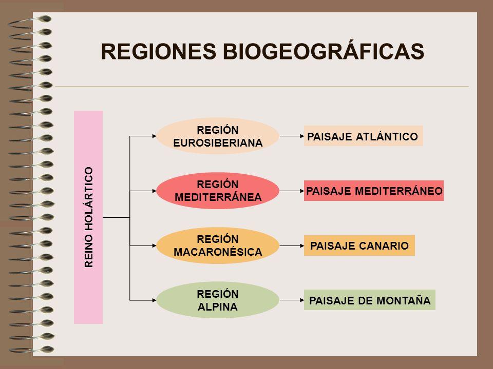 REGIONES BIOGEOGRÁFICAS REINO HOLÁRTICO REGIÓN EUROSIBERIANA REGIÓN MEDITERRÁNEA REGIÓN MACARONÉSICA PAISAJE ATLÁNTICO PAISAJE MEDITERRÁNEO PAISAJE CA