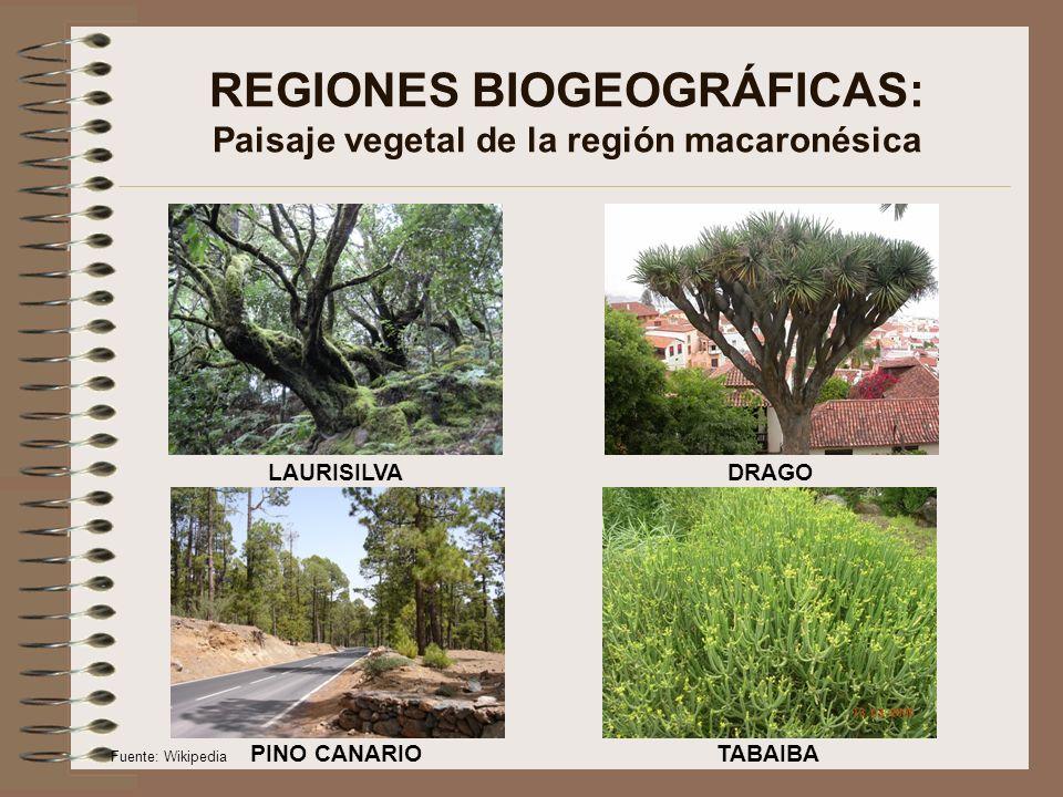 REGIONES BIOGEOGRÁFICAS: Paisaje vegetal de la región alpina CLISERIE DE LOS PIRINEOS PINO NEGRO Fuente: Wikipedia