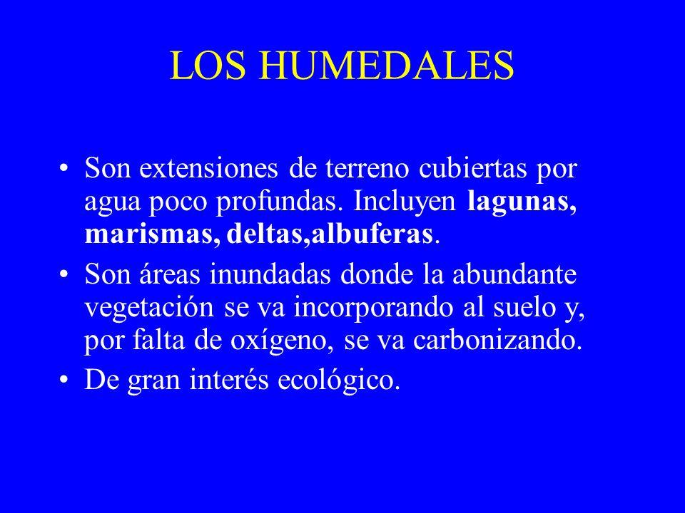 LOS HUMEDALES Son extensiones de terreno cubiertas por agua poco profundas. Incluyen lagunas, marismas, deltas,albuferas. Son áreas inundadas donde la