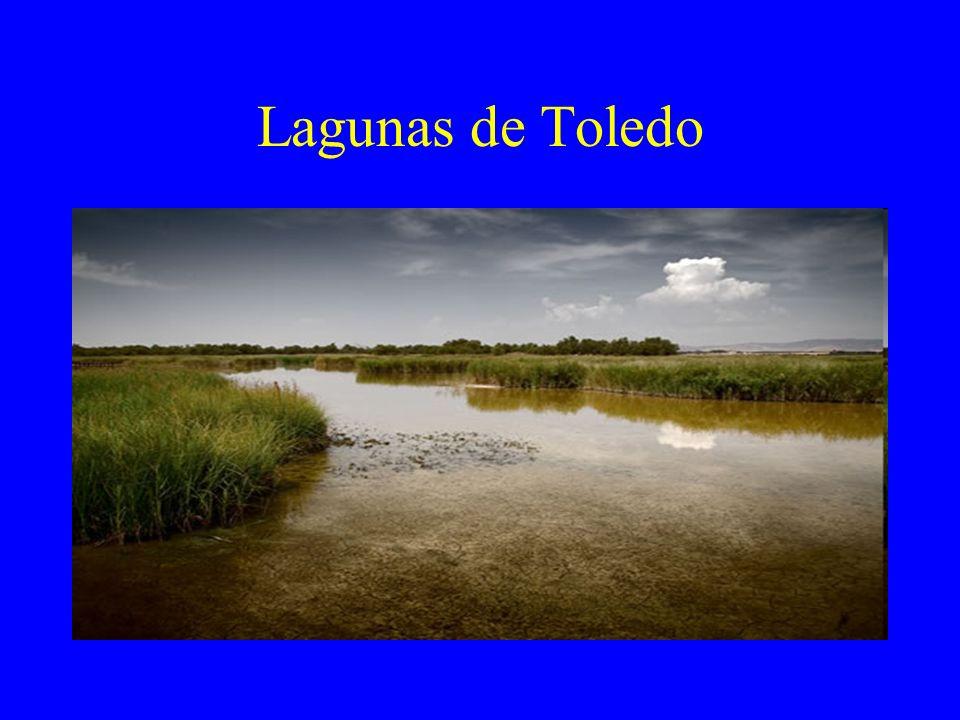 Lagunas de Toledo