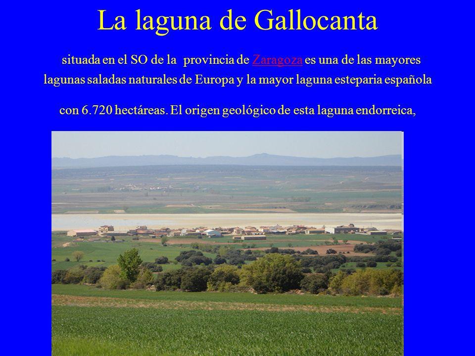 La laguna de Gallocanta situada en el SO de la provincia de Zaragoza es una de las mayores lagunas saladas naturales de Europa y la mayor laguna estep