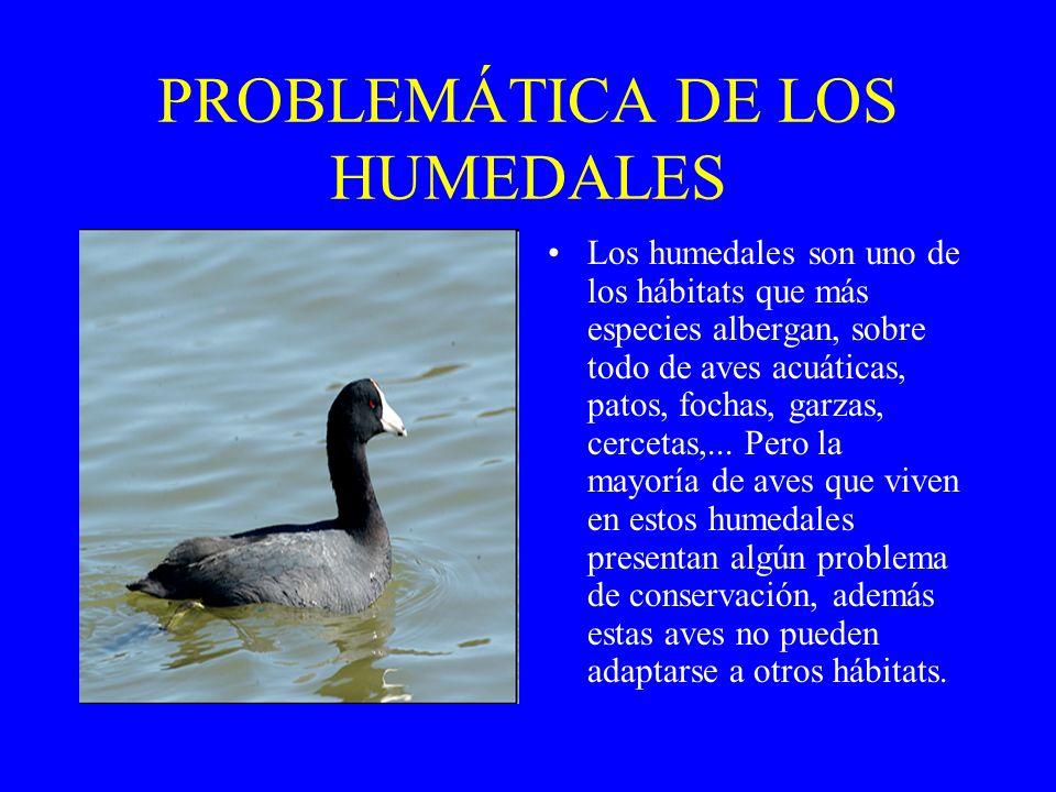 PROBLEMÁTICA DE LOS HUMEDALES Los humedales son uno de los hábitats que más especies albergan, sobre todo de aves acuáticas, patos, fochas, garzas, ce