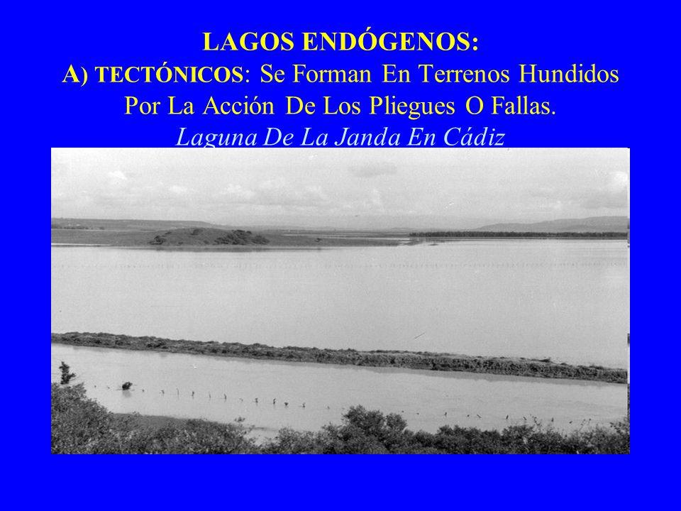 LAGOS ENDÓGENOS: A ) TECTÓNICOS : Se Forman En Terrenos Hundidos Por La Acción De Los Pliegues O Fallas. Laguna De La Janda En Cádiz