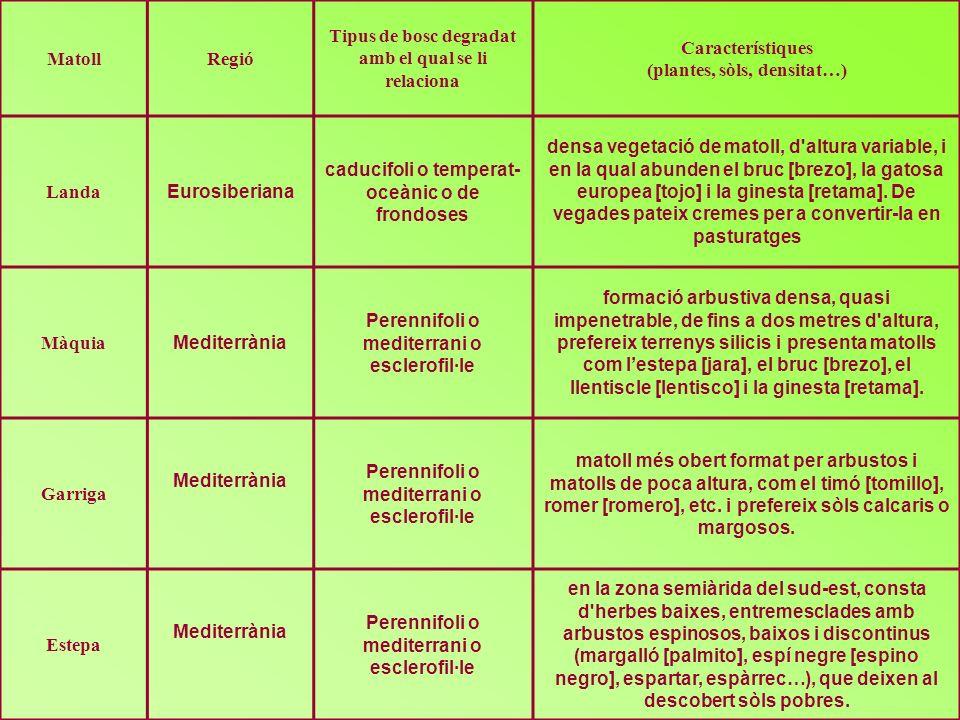 MatollRegió Tipus de bosc degradat amb el qual se li relaciona Característiques (plantes, sòls, densitat…) Landa Eurosiberiana caducifoli o temperat-