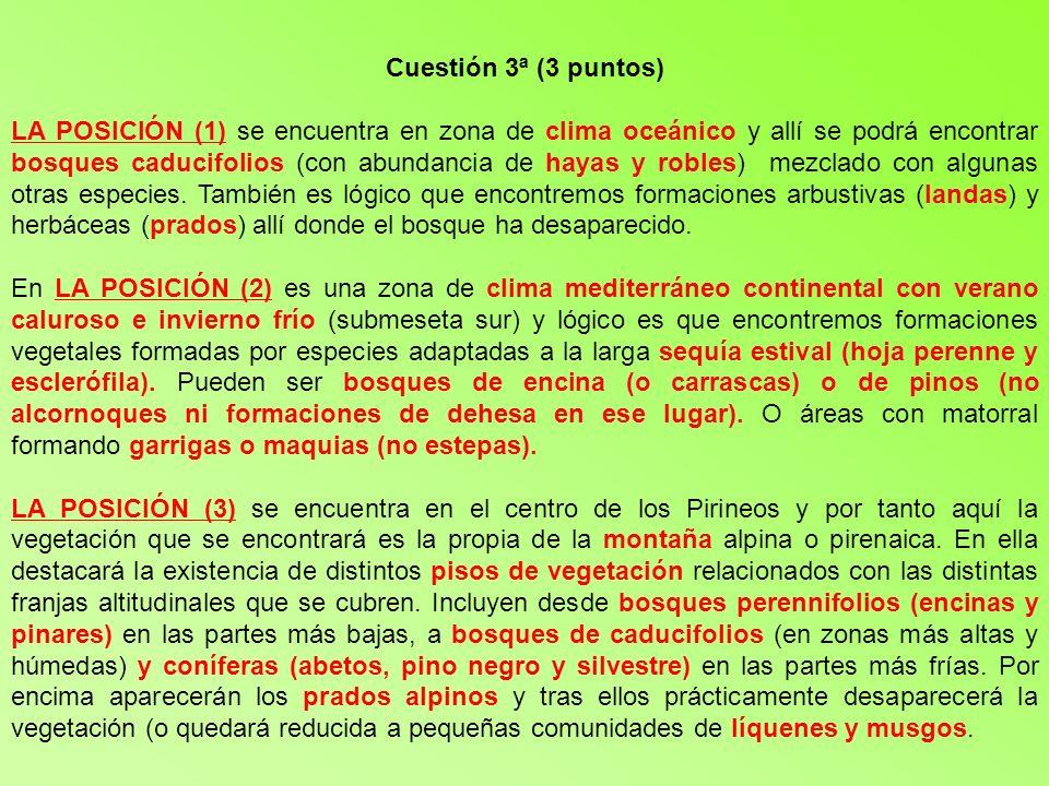 Cuestión 3ª (3 puntos) LA POSICIÓN (1) se encuentra en zona de clima oceánico y allí se podrá encontrar bosques caducifolios (con abundancia de hayas