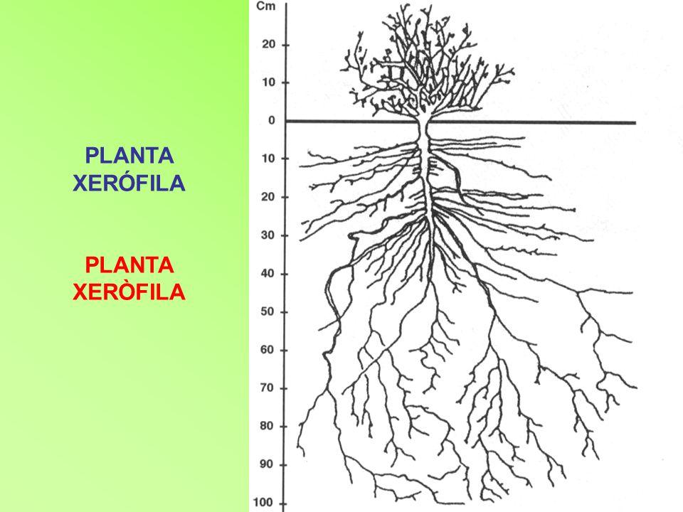 MatollRegió Tipus de bosc degradat amb el qual se li relaciona Característiques (plantes, sòls, densitat…) Landa Eurosiberiana caducifoli o temperat- oceànic o de frondoses densa vegetació de matoll, d altura variable, i en la qual abunden el bruc [brezo], la gatosa europea [tojo] i la ginesta [retama].