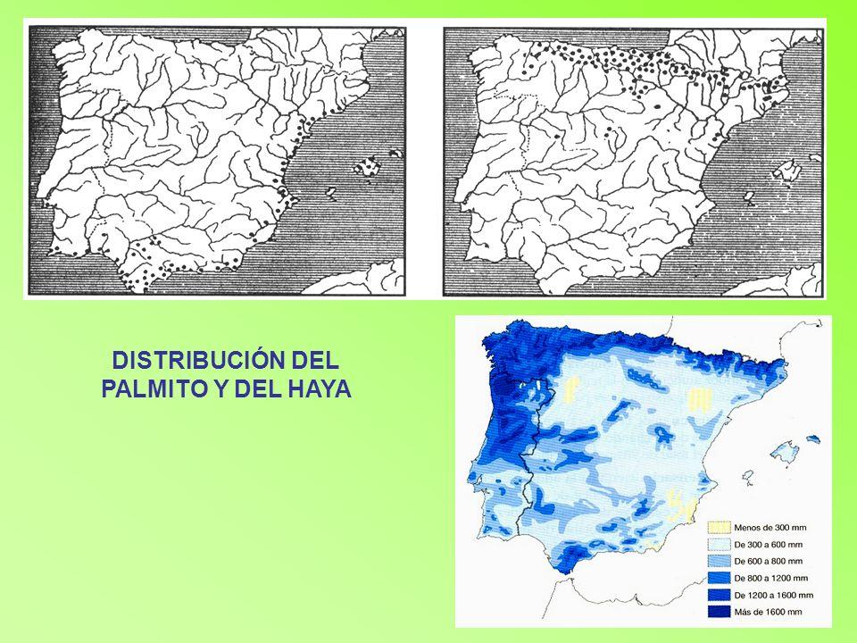 DISTRIBUCIÓN DEL PALMITO Y DEL HAYA