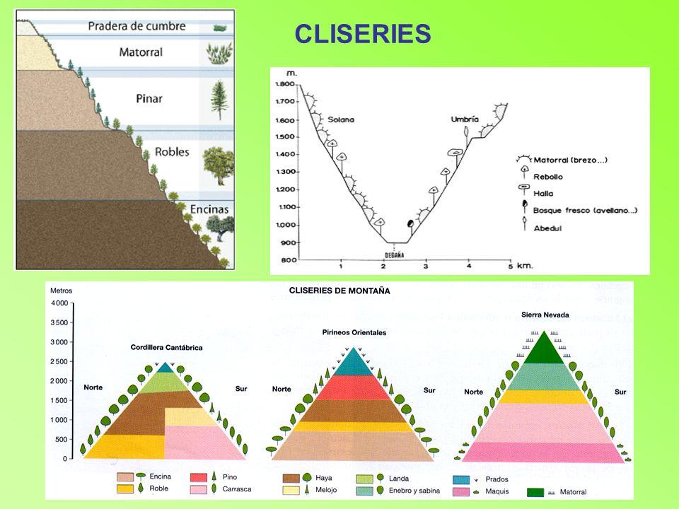 EUROSIBERIANOS:España verde Colino: Colinas (Encinas, costas,...) Montano:Montañas (Bosques caducifolios...) Alpino y subalpino: Alpino no hay bosque.
