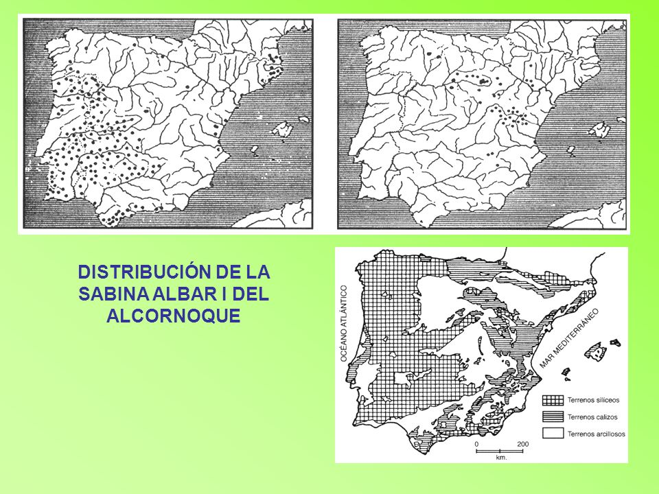 DISTRIBUCIÓN DE LA SABINA ALBAR I DEL ALCORNOQUE