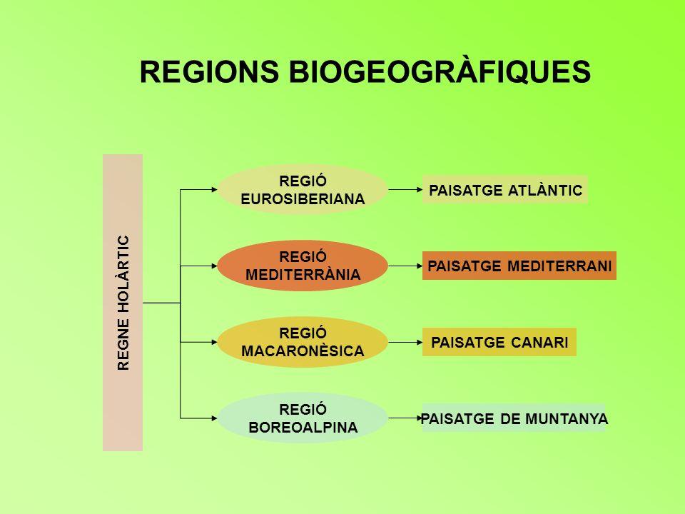 REGIONS BIOGEOGRÀFIQUES REGNE HOLÀRTIC REGIÓ EUROSIBERIANA REGIÓ MEDITERRÀNIA REGIÓ MACARONÈSICA PAISATGE ATLÀNTIC PAISATGE MEDITERRANI PAISATGE CANAR