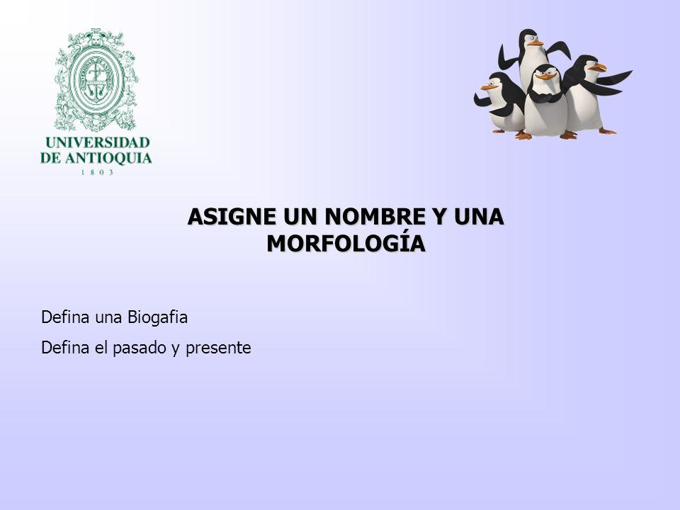 ASIGNE UN NOMBRE Y UNA MORFOLOGÍA Defina una Biogafia Defina el pasado y presente