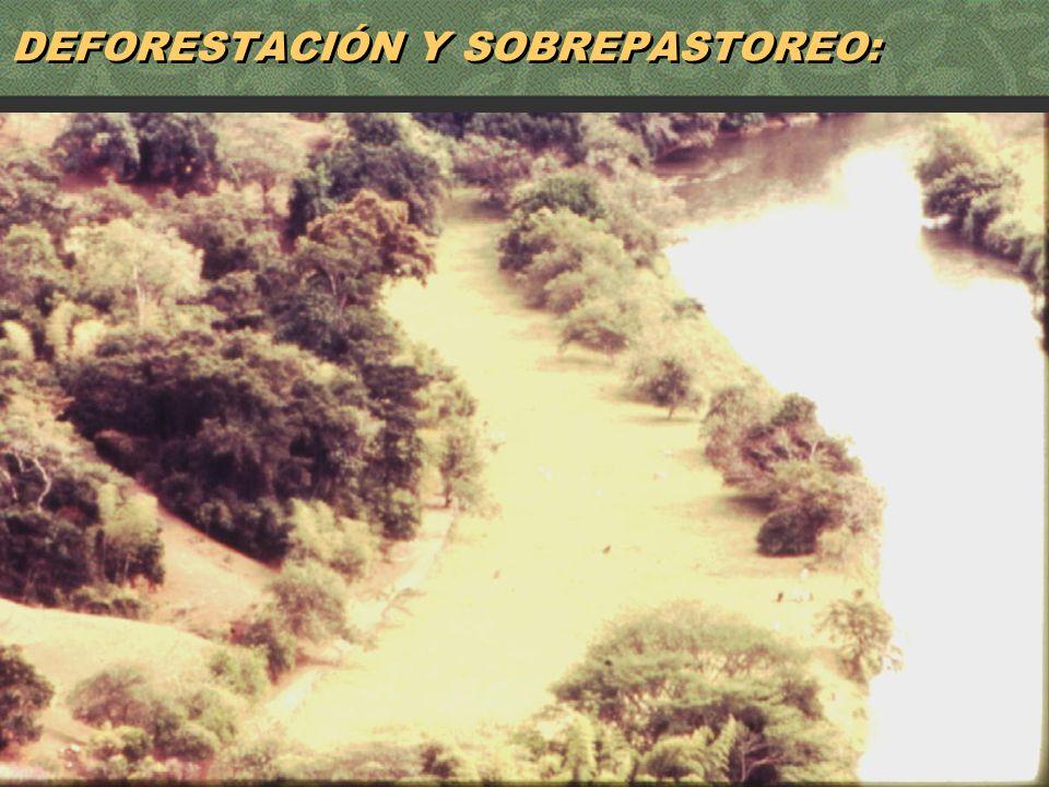 10 DEFORESTACIÓN Y SOBREPASTOREO: