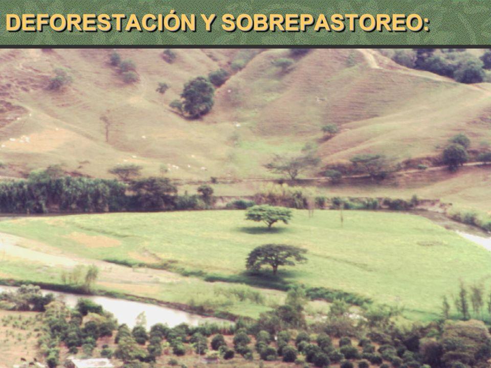 12 DEFORESTACIÓN Y SOBREPASTOREO:
