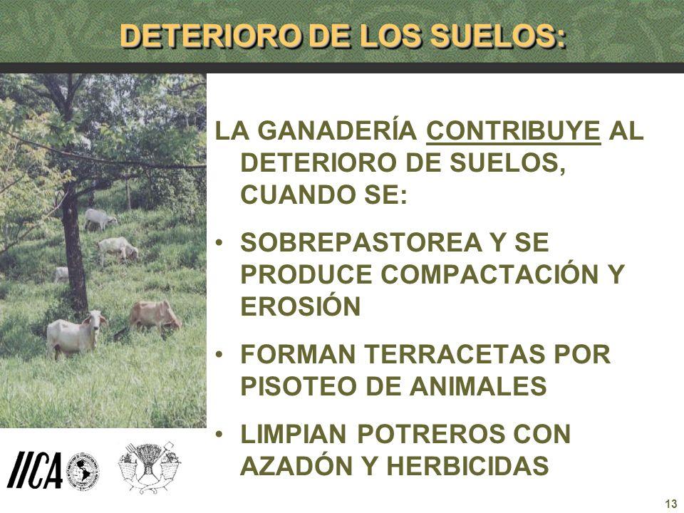 13 DETERIORO DE LOS SUELOS: LA GANADERÍA CONTRIBUYE AL DETERIORO DE SUELOS, CUANDO SE: SOBREPASTOREA Y SE PRODUCE COMPACTACIÓN Y EROSIÓN FORMAN TERRAC