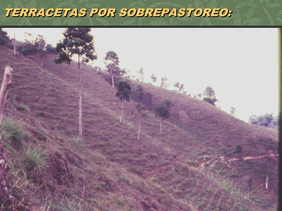 14 TERRACETAS POR SOBREPASTOREO: