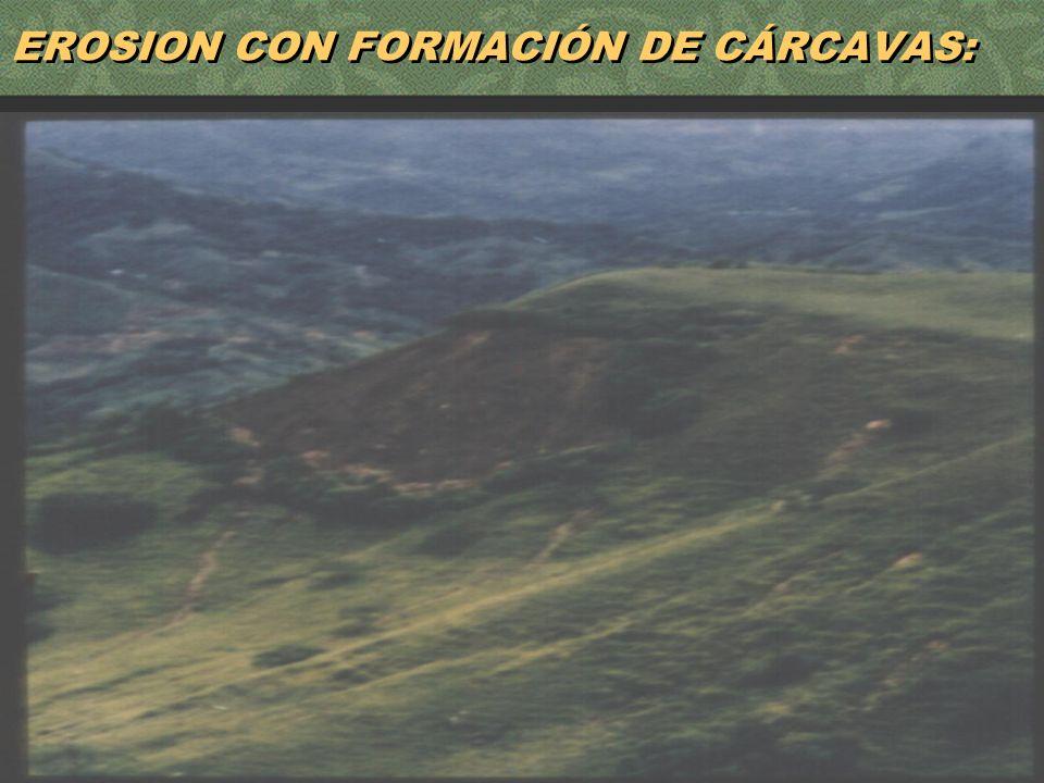 15 EROSION CON FORMACIÓN DE CÁRCAVAS: