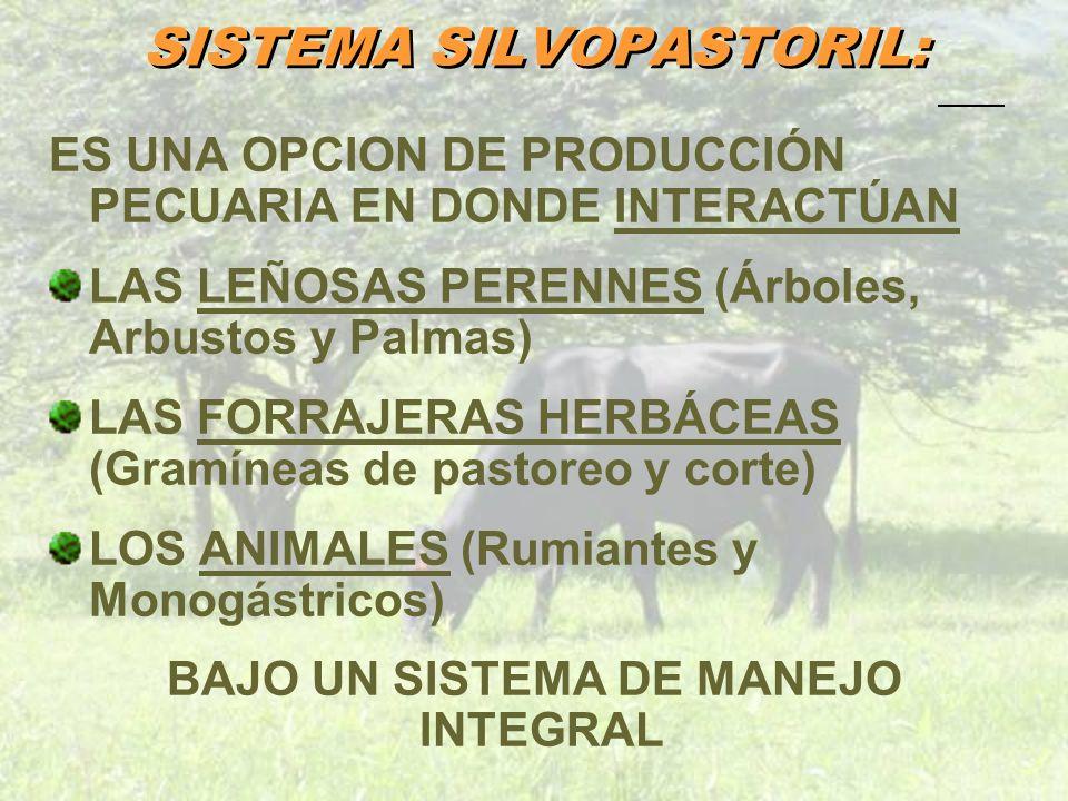SISTEMA SILVOPASTORIL: ES UNA OPCION DE PRODUCCIÓN PECUARIA EN DONDE INTERACTÚAN LAS LEÑOSAS PERENNES (Árboles, Arbustos y Palmas) LAS FORRAJERAS HERB
