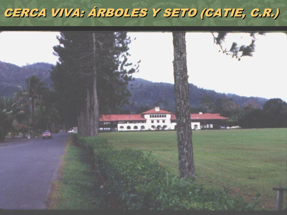 21 CERCA VIVA: ÁRBOLES Y SETO (CATIE, C.R.)