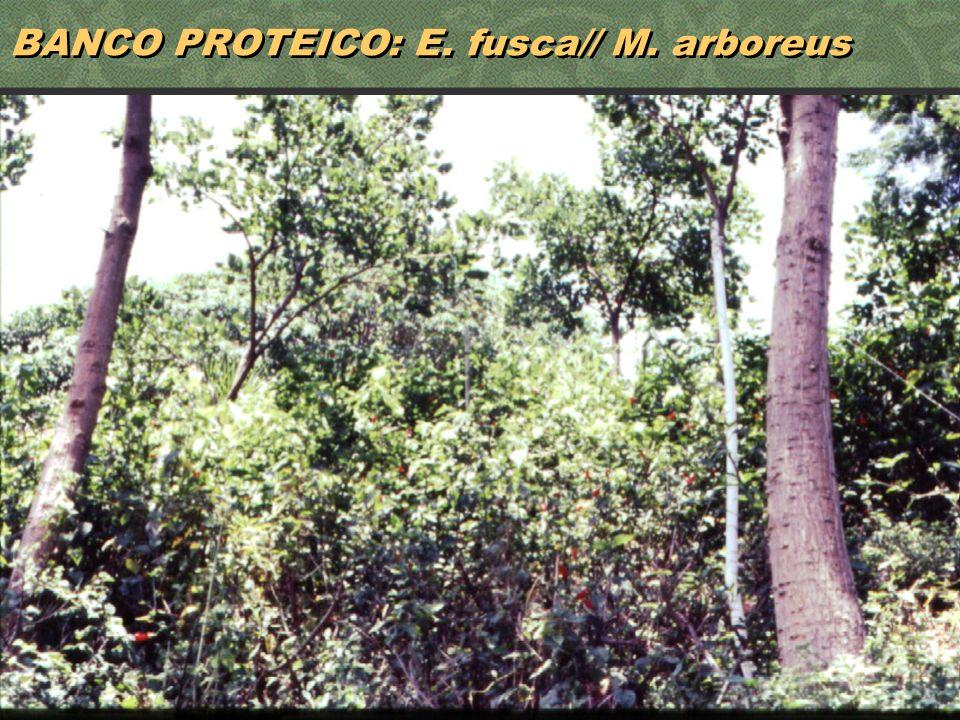 38 BANCO PROTEICO: E. fusca// M. arboreus