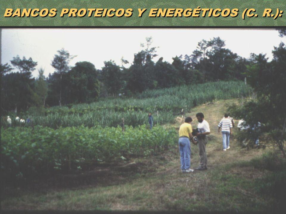 42 BANCOS PROTEICOS Y ENERGÉTICOS (C. R.):