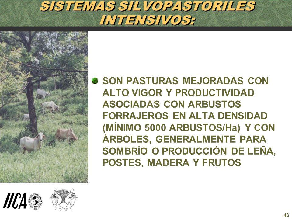 43 SISTEMAS SILVOPASTORILES INTENSIVOS: SON PASTURAS MEJORADAS CON ALTO VIGOR Y PRODUCTIVIDAD ASOCIADAS CON ARBUSTOS FORRAJEROS EN ALTA DENSIDAD (MÍNI