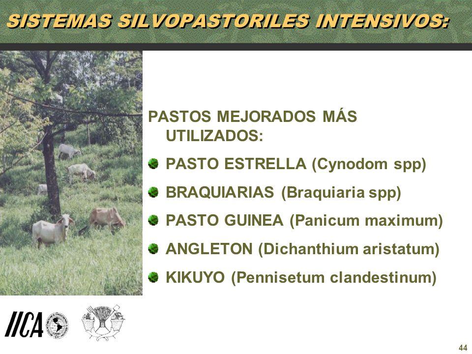 44 SISTEMAS SILVOPASTORILES INTENSIVOS: PASTOS MEJORADOS MÁS UTILIZADOS: PASTO ESTRELLA (Cynodom spp) BRAQUIARIAS (Braquiaria spp) PASTO GUINEA (Panic
