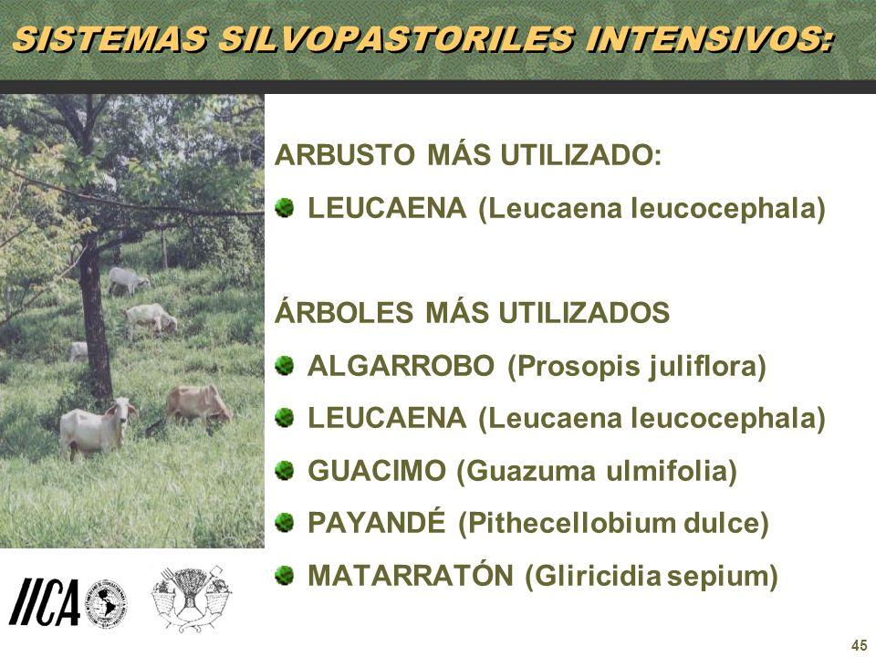45 SISTEMAS SILVOPASTORILES INTENSIVOS: ARBUSTO MÁS UTILIZADO: LEUCAENA (Leucaena leucocephala) ÁRBOLES MÁS UTILIZADOS ALGARROBO (Prosopis juliflora)