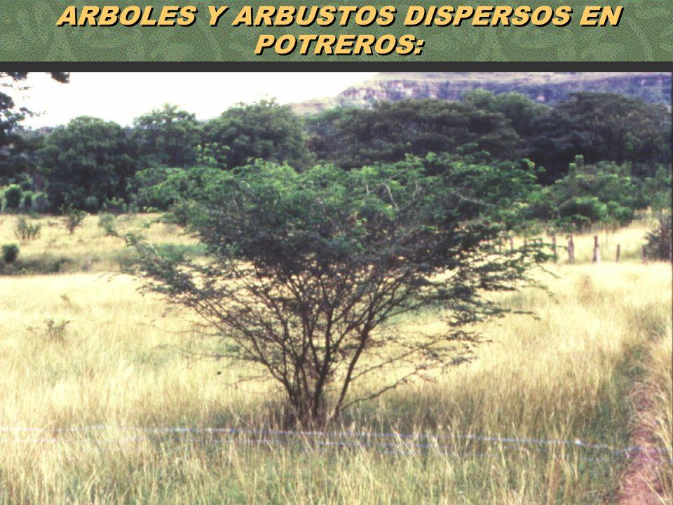 52 ARBOLES Y ARBUSTOS DISPERSOS EN POTREROS: