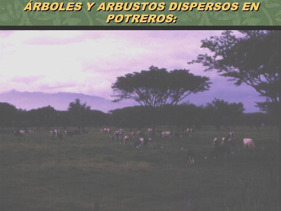 53 ÁRBOLES Y ARBUSTOS DISPERSOS EN POTREROS: