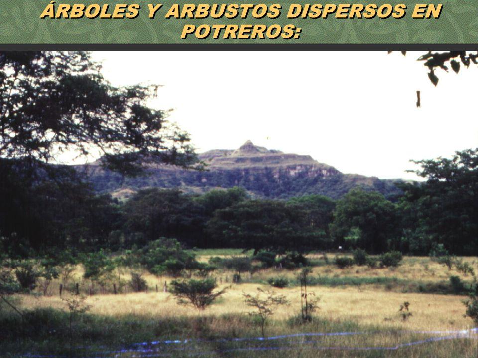 55 ÁRBOLES Y ARBUSTOS DISPERSOS EN POTREROS: