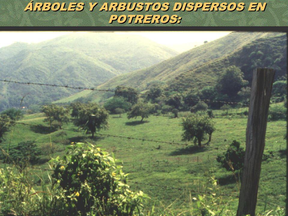 56 ÁRBOLES Y ARBUSTOS DISPERSOS EN POTREROS: