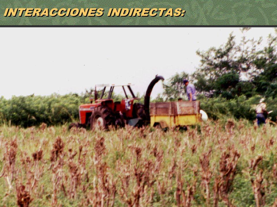 59 INTERACCIONES INDIRECTAS: