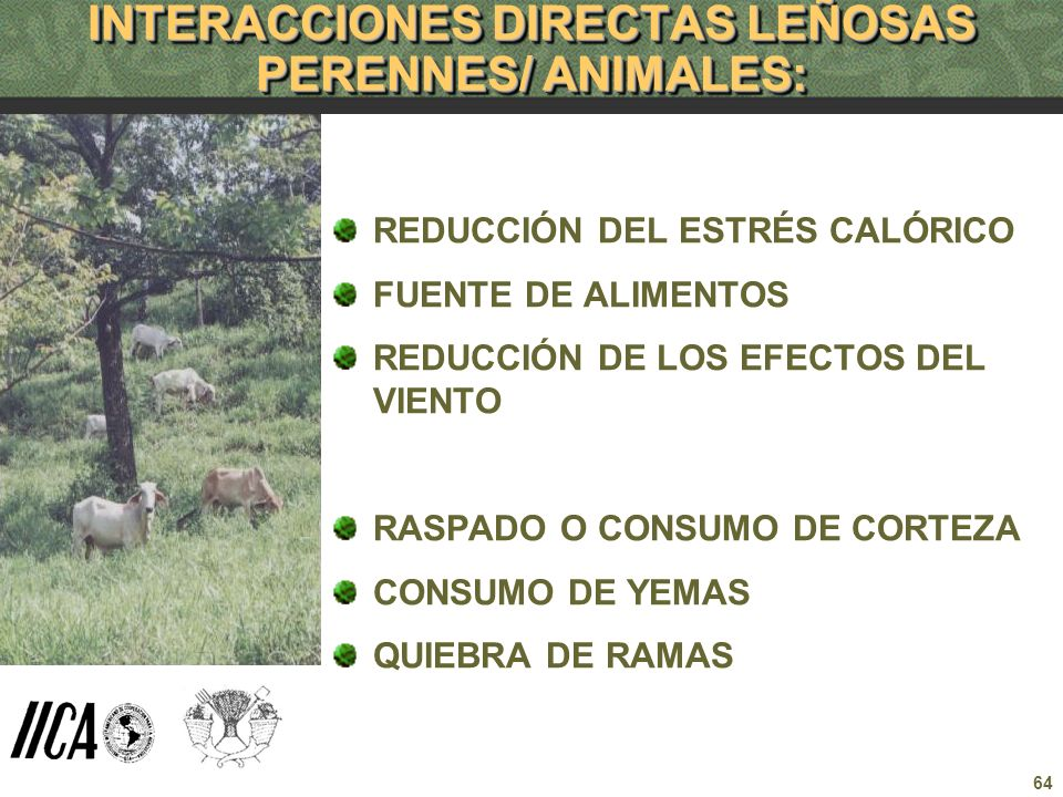 64 INTERACCIONES DIRECTAS LEÑOSAS PERENNES/ ANIMALES: REDUCCIÓN DEL ESTRÉS CALÓRICO FUENTE DE ALIMENTOS REDUCCIÓN DE LOS EFECTOS DEL VIENTO RASPADO O
