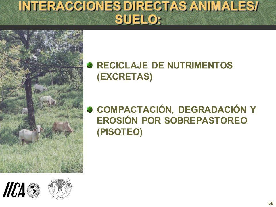 65 INTERACCIONES DIRECTAS ANIMALES/ SUELO: RECICLAJE DE NUTRIMENTOS (EXCRETAS) COMPACTACIÓN, DEGRADACIÓN Y EROSIÓN POR SOBREPASTOREO (PISOTEO)