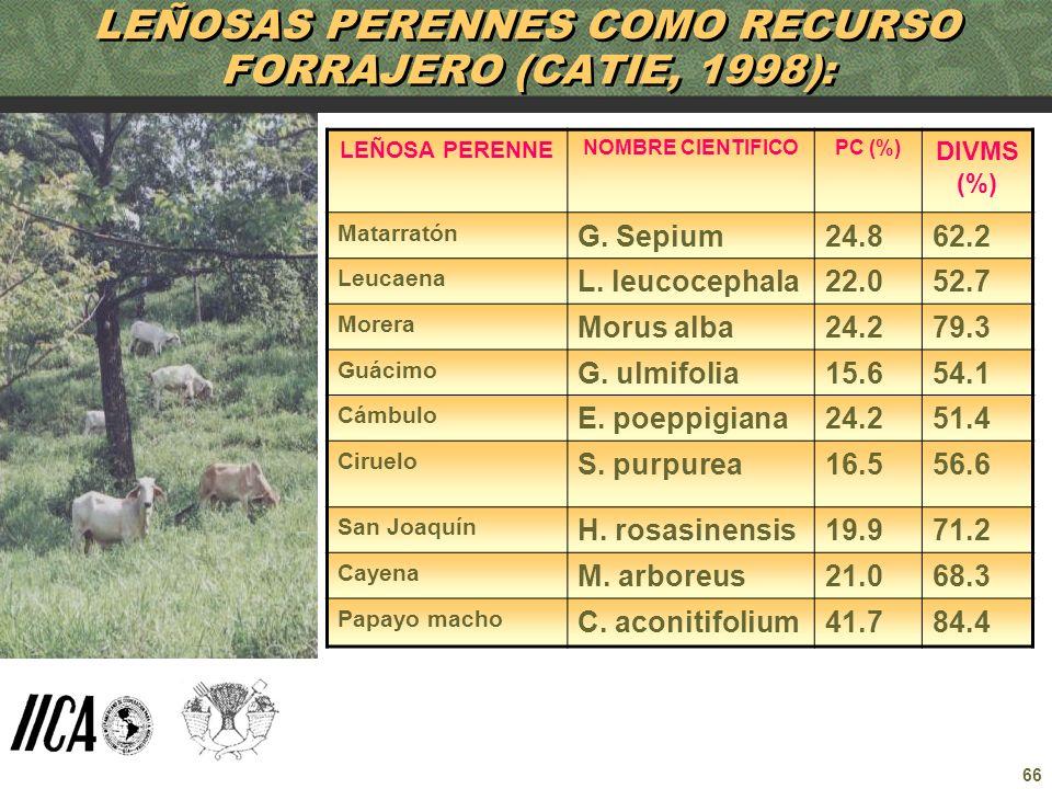 66 LEÑOSAS PERENNES COMO RECURSO FORRAJERO (CATIE, 1998): LEÑOSA PERENNE NOMBRE CIENTIFICOPC (%) DIVMS (%) Matarratón G. Sepium24.862.2 Leucaena L. le