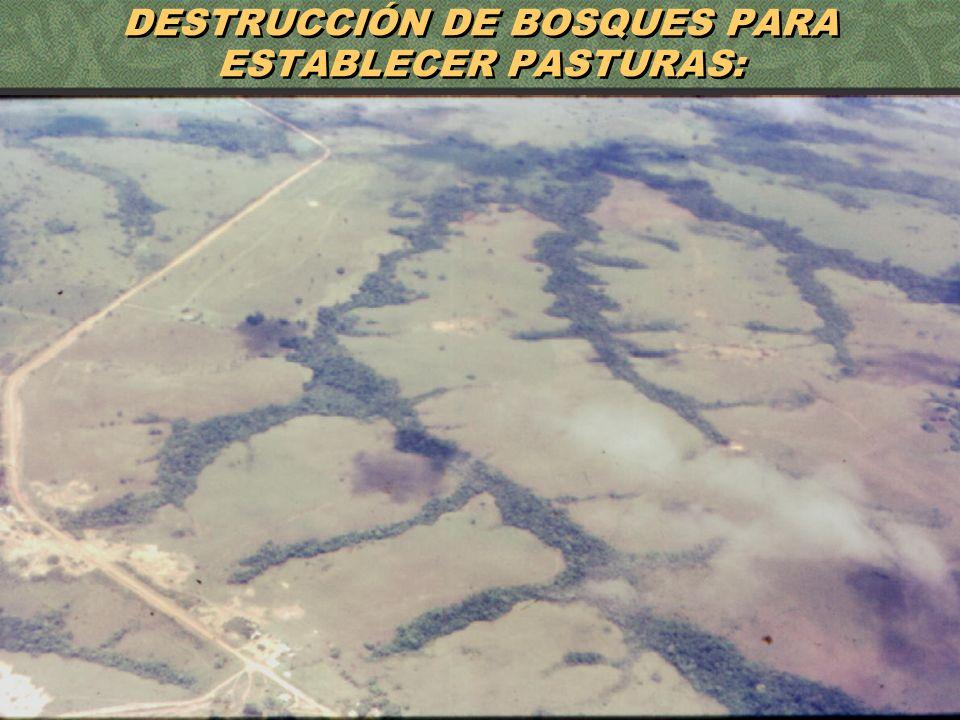 7 DESTRUCCIÓN DE BOSQUES PARA ESTABLECER PASTURAS: