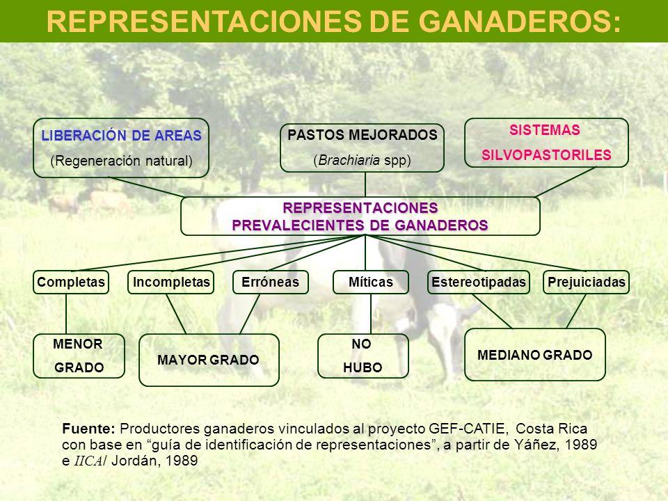MAYOR GRADO NO HUBO Fuente: Productores ganaderos vinculados al proyecto GEF-CATIE, Costa Rica con base en guía de identificación de representaciones,