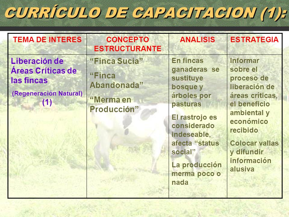 83 TEMA DE INTERESCONCEPTO ESTRUCTURANTE ANALISISESTRATEGIA Liberación de Áreas Críticas de las fincas (Regeneración Natural) (1) Finca Sucia Finca Ab