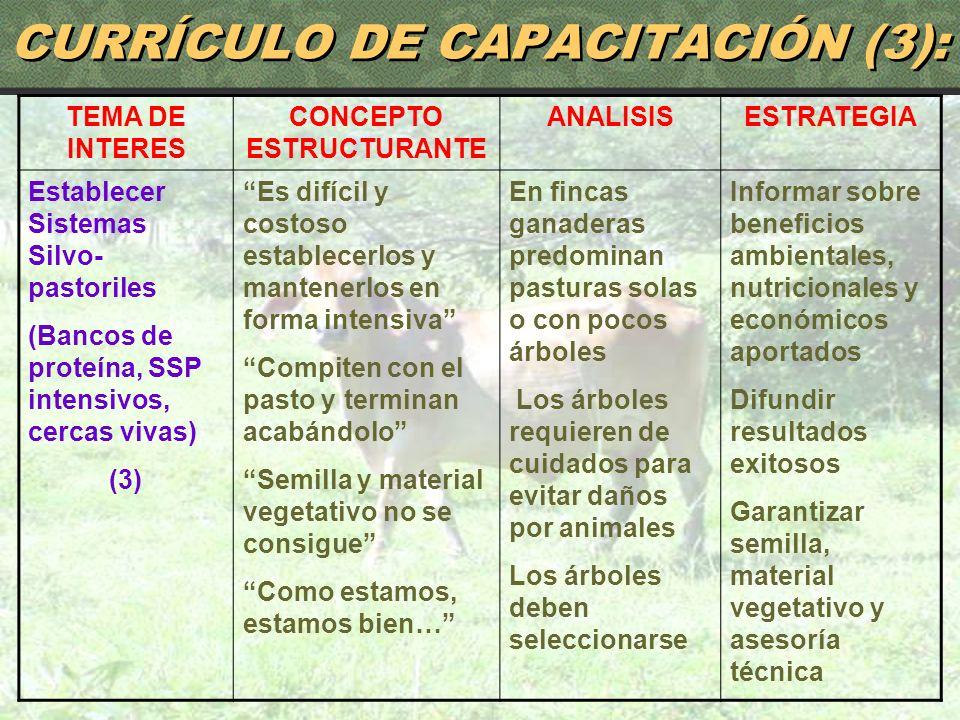 85 CURRÍCULO DE CAPACITACIÓN (3): TEMA DE INTERES CONCEPTO ESTRUCTURANTE ANALISISESTRATEGIA Establecer Sistemas Silvo- pastoriles (Bancos de proteína,