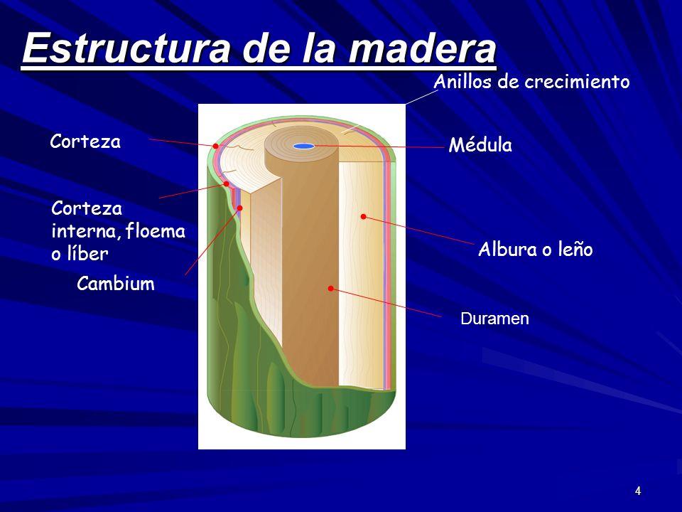 4 Estructura de la madera Corteza Corteza interna, floema o líber Cambium Médula Albura o leño Anillos de crecimiento Duramen