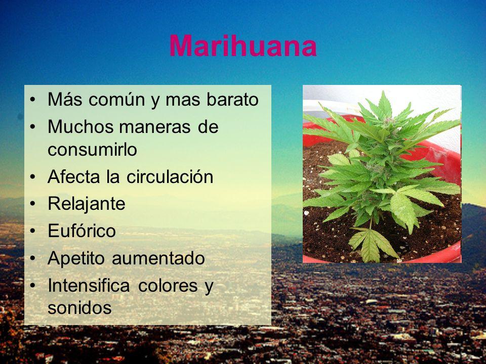 Marihuana Más común y mas barato Muchos maneras de consumirlo Afecta la circulación Relajante Eufórico Apetito aumentado Intensifica colores y sonidos