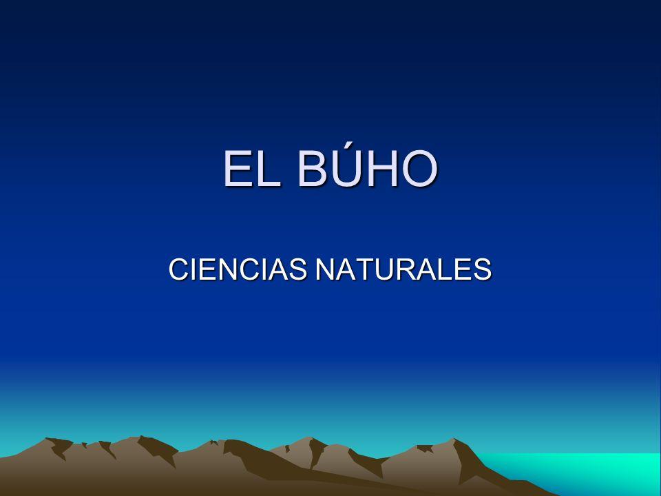 EL BÚHO CIENCIAS NATURALES