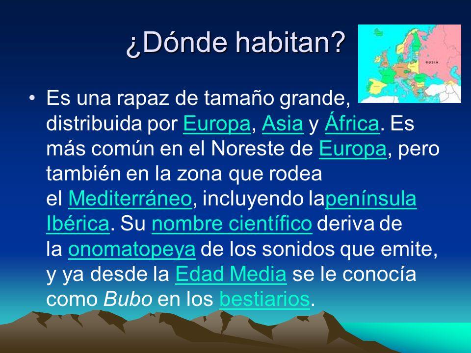 ¿Dónde habitan? Es una rapaz de tamaño grande, distribuida por Europa, Asia y África. Es más común en el Noreste de Europa, pero también en la zona qu