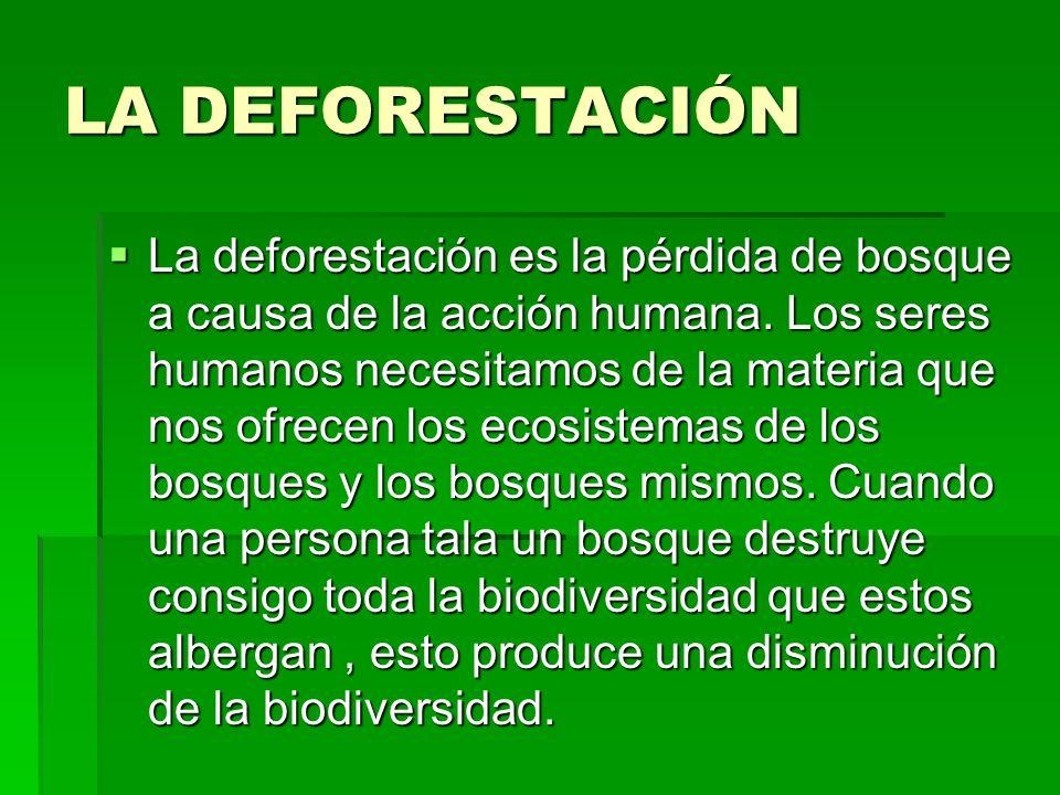 LA DEFORESTACIÓN La deforestación es la pérdida de bosque a causa de la acción humana.