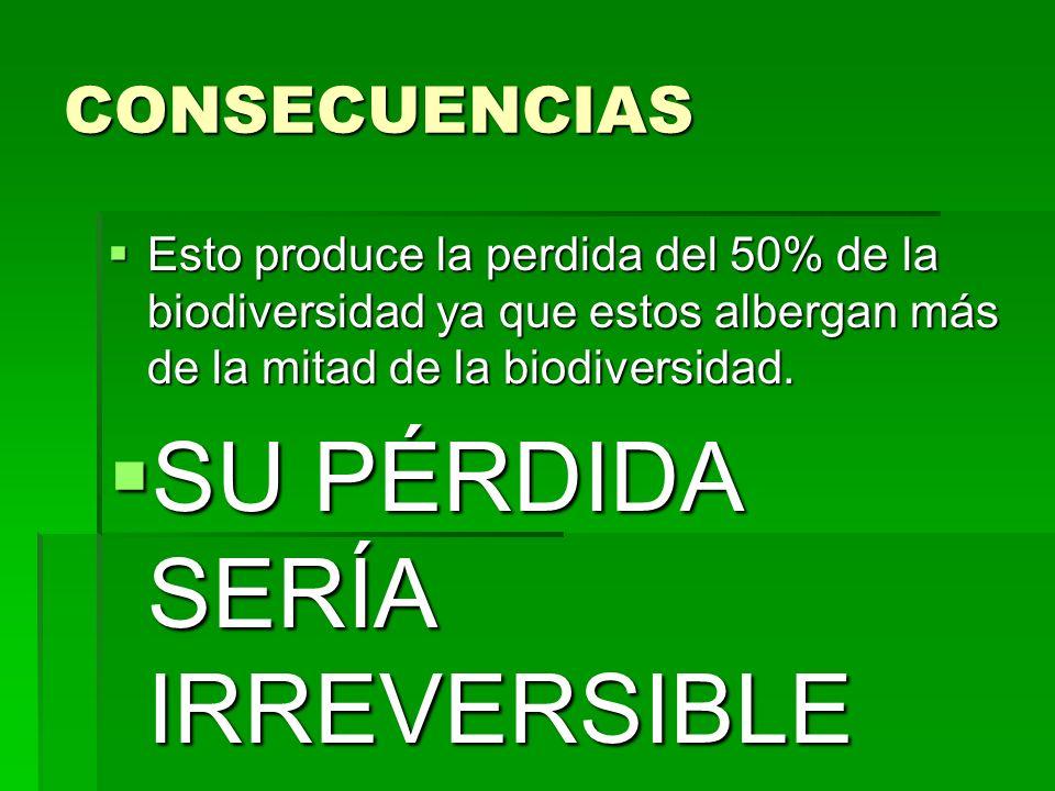 CONSECUENCIAS Esto produce la perdida del 50% de la biodiversidad ya que estos albergan más de la mitad de la biodiversidad.