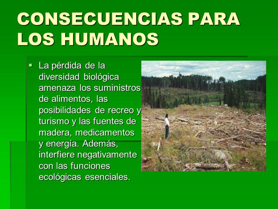 LUGARES MAYOR AFECTADOS Como es lógico, las zonas con mayor humedad son aquellas que mayoritariamente albergan más biodiversidad por lo que tienen más ecosistemas arbóreos.La gente ve como estos bosques albergan mucha madera, y a causa de la pobreza la gente tala estos bosques en busca de dinero.