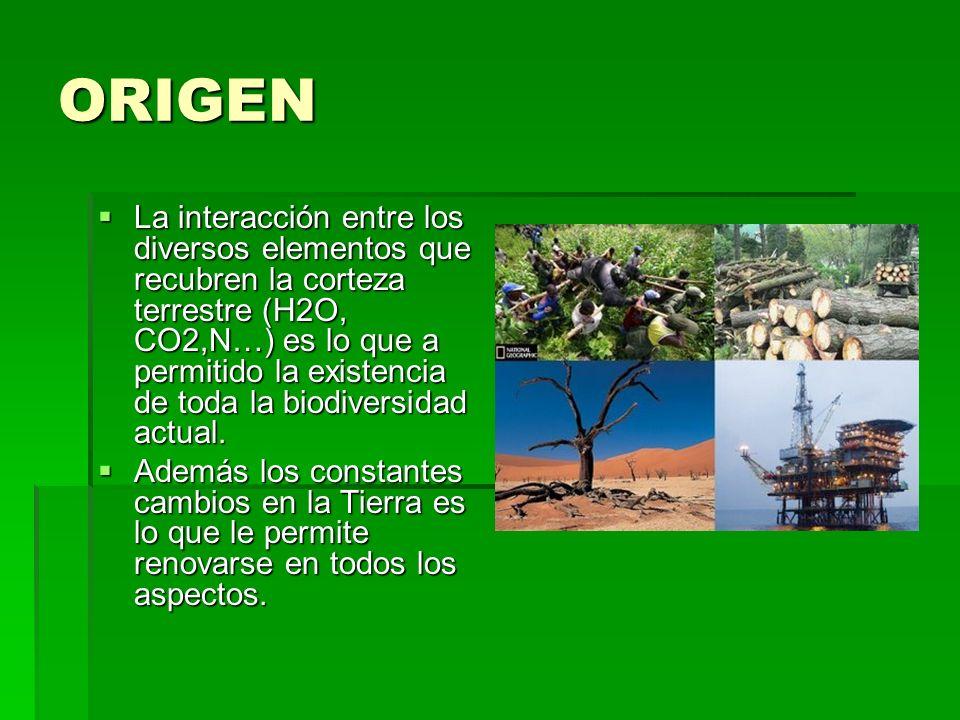 ORIGEN La interacción entre los diversos elementos que recubren la corteza terrestre (H2O, CO2,N…) es lo que a permitido la existencia de toda la biodiversidad actual.